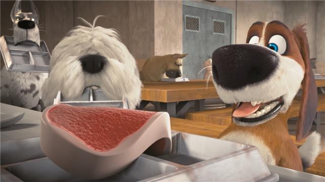 【狗狗的疯狂假期】惨啦!狗狗奥兹只能吃猫粮