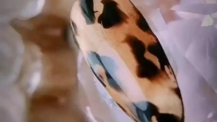 美甲#超气质的豹纹#杨艺心