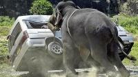实拍:大象抓狂的瞬间