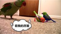 假鸟遇上真鸟