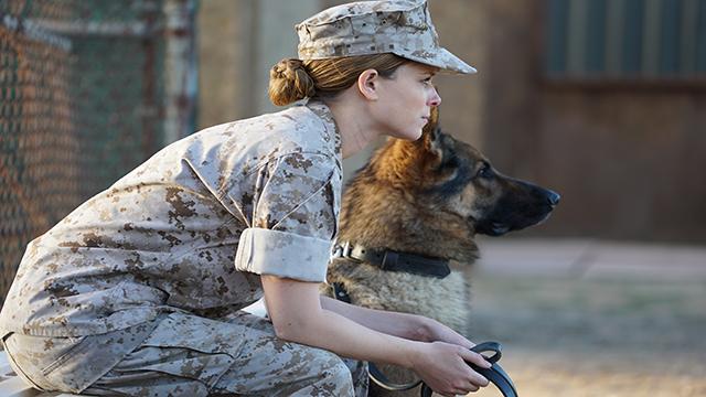 【战犬瑞克斯】背负拯救生命使命的军犬